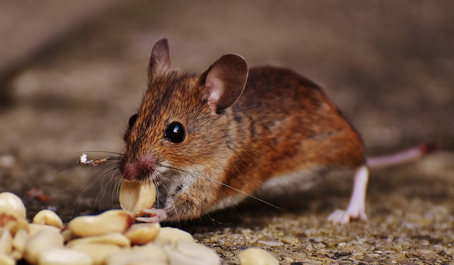 Are you in Need of a Pest Control Company?